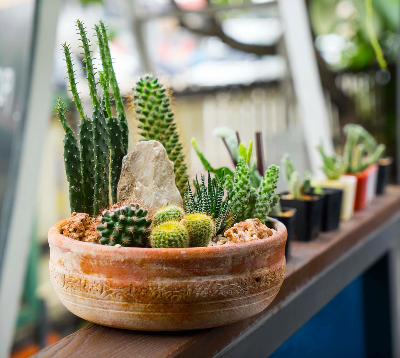 cactussen2
